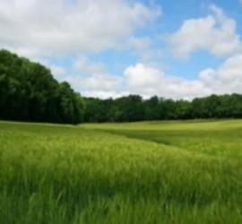 terrain-a-vendre-beuvry-la-foret-59310-8527